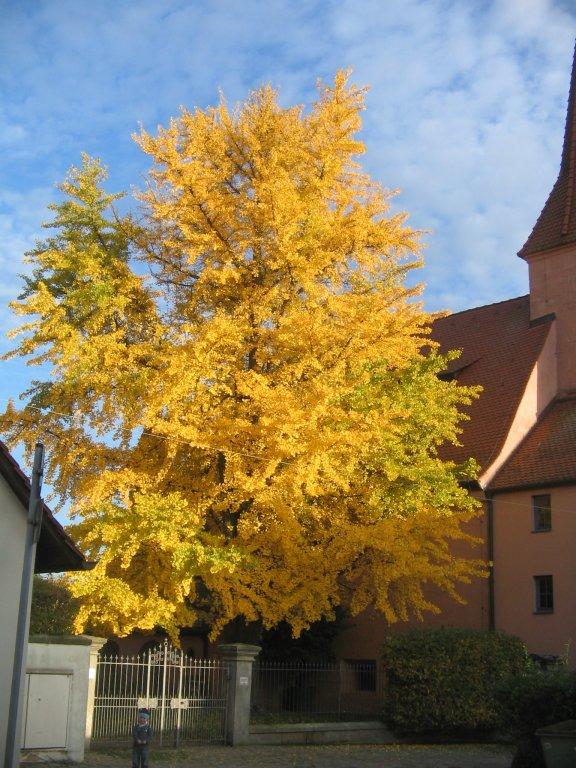 Herbst 2013