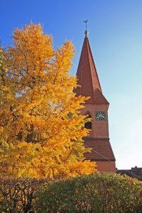 Ginkgobaum St. Matthäus Vach