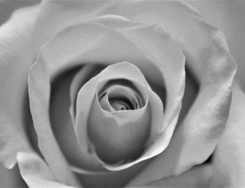 Sophie Scholl (*9.5.1921): Aufstand des Gewissens